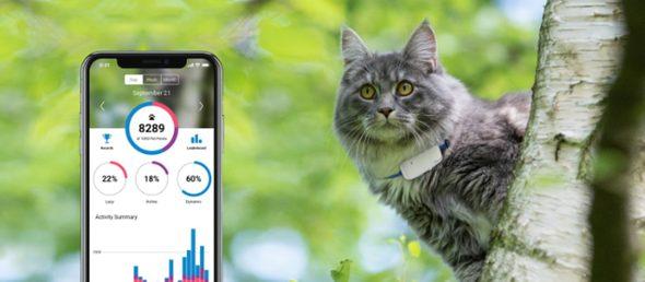 GPS dla kota- urządzenie, które zapewnia bezpieczeństwo każdemu domowemu pupilowi