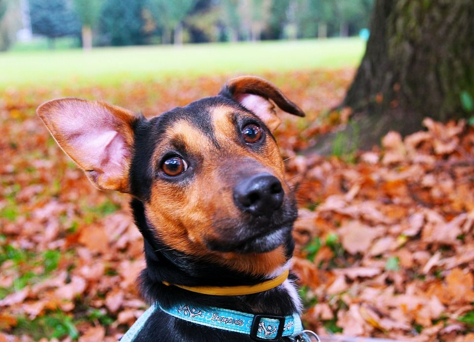 Profilaktyka anty kleszczowa dla psów