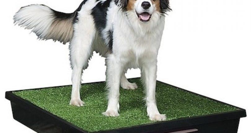 Pies i kuweta- czy to się może udać?