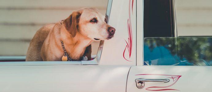 Jak podróżować z psem?